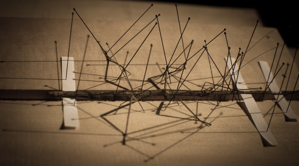 photograph of a pinned stick insect